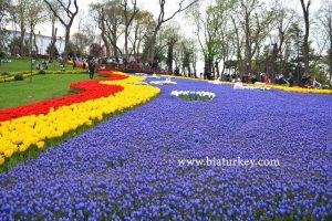 فستیوال لاله پارک امیرگان استانبول